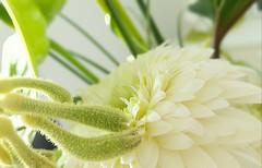 (wunderpar aka the_real_life) Tags: straus blumenstraus brautstraus blume pflanze weiss grn wunderpar handy samsunggalaxysmartphone6