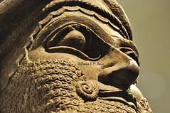 Head of a Lamassu from Nimrud, Iraq (Sumer and Akkad!) Tags: northwestpalace nimrud ashurnasirpal iraq mesopotamia lamassu humanheadedlion britishmusuem london kalhu calah