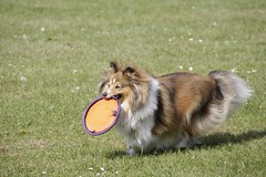 "Frisbee in the park • <a style=""font-size:0.8em;"" href=""http://www.flickr.com/photos/55880040@N05/5192789249/"" target=""_blank"">View on Flickr</a>"