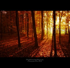 . ..light.works.. . (oliver's | photography) Tags: autumn trees light nature photoshop canon eos flickr raw image  hannover adobe copyrighted pixelwork oliverhoell theacademytreealley pixelwork10photography photographeroliverhoell allphotoscopyrighted