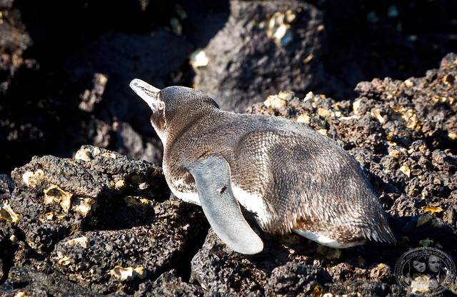 Penguin Sunbathing