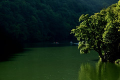 green world (torobala) Tags: world lake tree green fa t miskolc zld hmor lillafred vilg