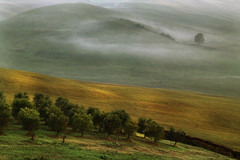 one against many (David Butali) Tags: trees light italy sun fog rural canon italia side country campagna tuscany fields siena toscana sole nebbia luce textured landascape asciano 24105 cs4 500d saariysqualitypictures updatecollection dyaln66