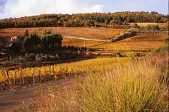 Vineyards in Chianti Classico (Necator) Tags: italien italy film toscana ferie chianticlassico canoneos3 fujivelvia100 ef50mmf18mkii 4800dpi positivescan toscana2010efterår
