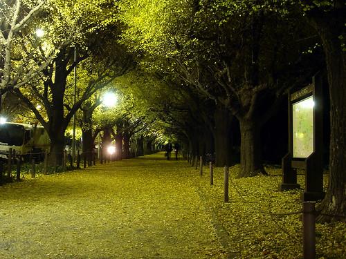 an avenue of ginkgo trees in Jingu Gai-en Tokyo.