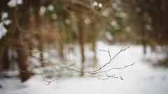 (edgaa) Tags: winter white snow nature forest germany bokeh natur bokehmonster sonyalpha850