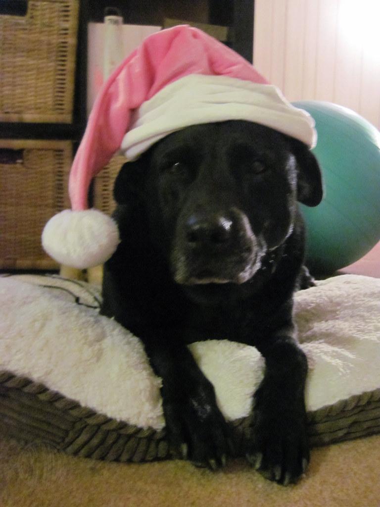 Santa Holly