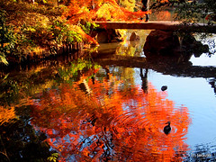 Burning Pond (_takau99) Tags: trip travel vacation holiday reflection topv111 japan gardens pen garden tokyo japanesegarden pond december olympus topv222 autumnleaves   topf10 sengoku 2010 rikugien   komagome   takau99 penlite   rikugiengardens epl1  gettyimagesjapanq1