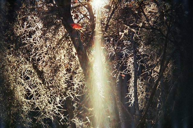 light through tree