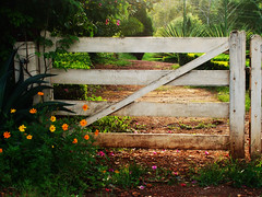 End of the Road (osvaldoeaf) Tags: road trip travel flowers trees brazil sky sun sunlight nature grass yellow speed fence garden landscape dawn drive golden petals gate strada dusk path blossoms estrada journey freeway gateway cerrado blooms goinia gois lightend springsunset wonderfulworldofflowers
