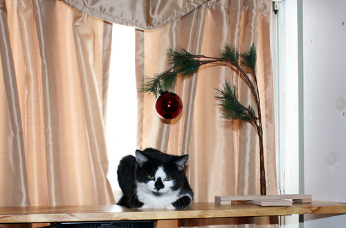 Juniper, a small black and white kitten with a face that looks oddly like a skull due to a propitious black triangle on his nose, kittyloafs underneath a small wilted artificial Winterthing tree which boasts one round red ornament.