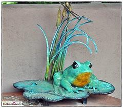 Sedona Froggy Art (Ponderings) Tags: froggy sedonaart ceramicfrog frogart sedonaartscenter frogonalilypadoakcreekcanyonartscenic