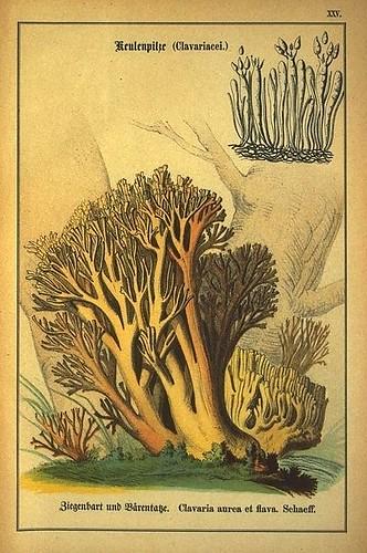 017-Allgemein verbreitete eßbare und schädliche Pilze 1876- Wilhelm von Ahles