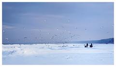 Jurmala (©Andrey) Tags: sea snow cold weather birds seaside latvia jurmala lettonie юрмала kauguri ilobsterit