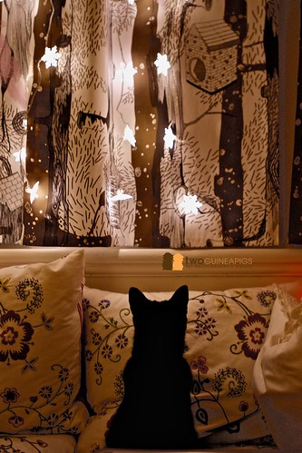 twoguineapigs pet photography black cat admiring christmas lights