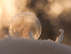Frozen Soap Bubble (richard.heeks) Tags: ice frozen soap pattern freezing bubble iced froze