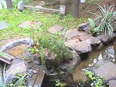 DSC00189 (Affiat) Tags: garden backyard natural taman ikan kolam