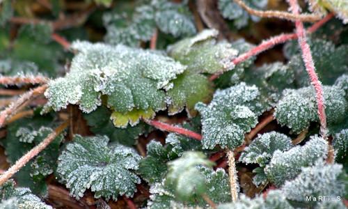 un jardín en invierno