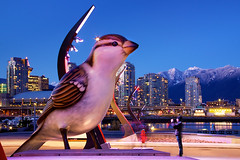 Tonight in Vancouver: What Do Hungry Giant Sparrows Eat? ([travelfox]) Tags: city longexposure winter snow canada skyline vancouver buildings bigbird photographer bc britishcolumbia sparrow thebirds bluehour olympicvillage northshoremountains canon50d giantbirds giantsparrow vancouvermyfanwymacleod