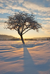 Cold Morning (Thorsten Scheuermann) Tags: winter shadow snow tree clouds sunrise germany weingarten