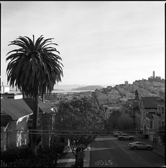 LA or San Francisco? (Summicron20/20) Tags: bridge tower 6x6 zeiss island bay san francisco treasure kodak trix hasselblad 60mm coit cf 220 distagon f35 320txp 201f