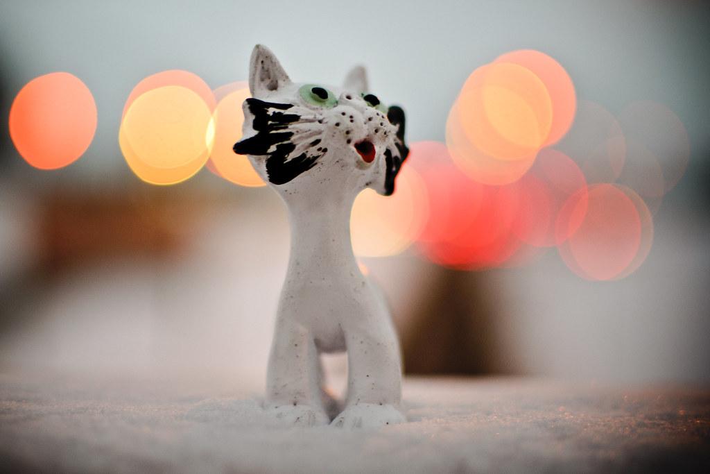 New Cat #4/365