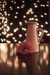 bokeh  ♥ (Abeer Hussein) Tags: canon bokeh شرح 5018 تصوير بالفوتوشوب درس سحب عدسة اللون 450d صفراء كانون قلوب اضاءة ترايبود طريقة كاميرة بوكيه