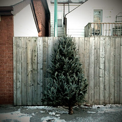 temporary forest (happ) Tags: trees holiday toronto trash garbage christmastree alleys alleyways