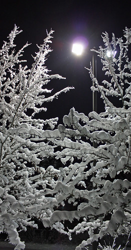 Snow-covered trees at night (closer)