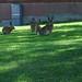 Dansande harar /Dancing rabbits 5