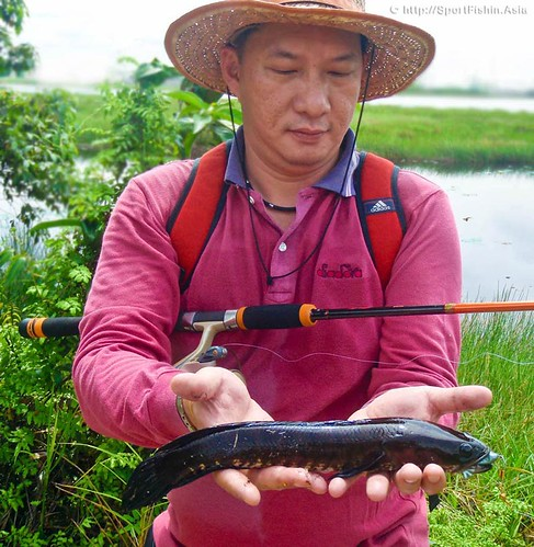 how to clean a snakehead fish
