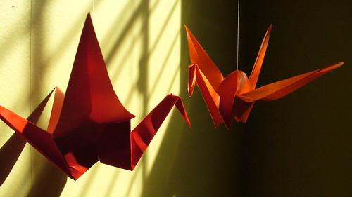 week #1/52: sun birds