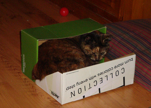 Cat in Shoebox