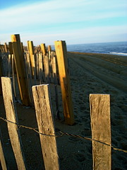 Beach Fence Posts in Later Afternoon