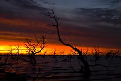 IMG_9966 (Bianca Ho) Tags: lake pamamaroo