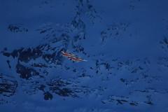 Patrouille Suisse in der Figur / Formation Shadow im Kanton Bern in der Schweiz (chrchr_75) Tags: hurni christoph schweiz suisse switzerland svizzera suissa swiss kanton bern berne berna bärn kantonbern lauberhorn lauberhornrennen samstag 2011 alpen alps berge mountains berner oberland berneroberland wengen kleine scheidegg chrchr chrchr75 chrigu chriguhurni 1101 tiger f5e schweizer luftwaffe armee army air force kampfflugzeug northrop patrouille patrouillesuisse programm vorführung demonstration militär military albumschweizerluftwaffe chriguhurnibluemailch januar januar2011 albumzzz201101januar albumpatrouillesuisse kampfjet kunstflugstaffel hurni110115