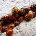Ladybug-a-palooza