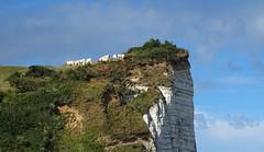 Easy (francis_erevan) Tags: vache cow falaise vide cliff vertige vertigo