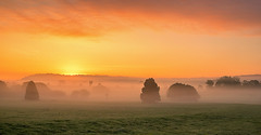 Misty Sunrise (jactoll) Tags: walcote warwickshire dawn sunrise dawnmist mist misty landscape light trees sony a7ii zeiss 1635mmf4 jactoll