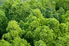 Local Texture (timmytsang) Tags: trees texture landscape hongkong nikon natural dx lightroom tsingyi d5000 55200vr