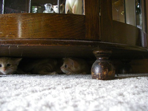 Two kittens under cabinet