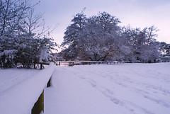 Snowy Poole Park (Kasia Nowak) Tags: park snow landscape december snowy dorset poole kasia 2010 nowak