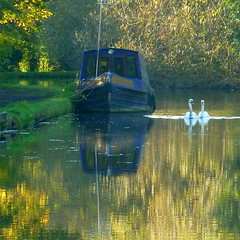shades of autumn (jjamv) Tags: uk bridge autumn trees sunset england sky mountain reflection tree london nature water field alberi river landscape boat canal swan lock path natura swans sentiero barge narrowboat hertfordshire canalboat grandunioncanal bosco herts apsley sentieri 100commentgroup jjamv julesvtravel aboveandbeyondlevel1 aboveandbeyondlevel2
