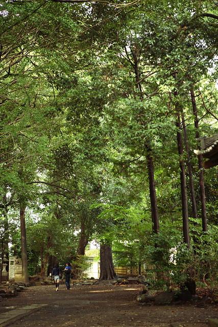 神社の樹木