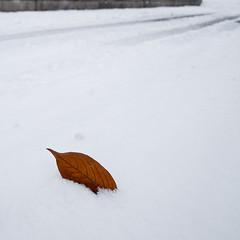 Blatt im Schnee (gartenzaun2009) Tags: schnee winter snow leaf blatt