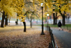 Autumn Colors (sohiroshi) Tags: leica city nyc autumn newyork tree fall nature leaves 50mm bokeh centralpark manhattan cosina voigtlander 11 m8 nokton voigtländer cv