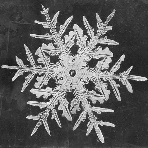 Snowflake Study, by Wilson A. Bentley, 1890, Smithsonian Institution Archives, Image ID# RU 31 Box 12 Folder 17.