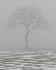Nella nebbia (osserv@r) Tags: winter tree fog piemonte nebbia albero inverno merella novese