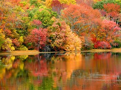 I'm in Love with Autumn (Stanley Zimny) Tags: park autumn trees red orange lake reflection tree fall nature colors leaves automne catchycolors leaf colorful colours seasons natural fallcolors herbst autumncolors fourseasons reflexions autunno autumnal colorexplosion 4seasons sgis ahorn jesien jesiennie 100commentgroup
