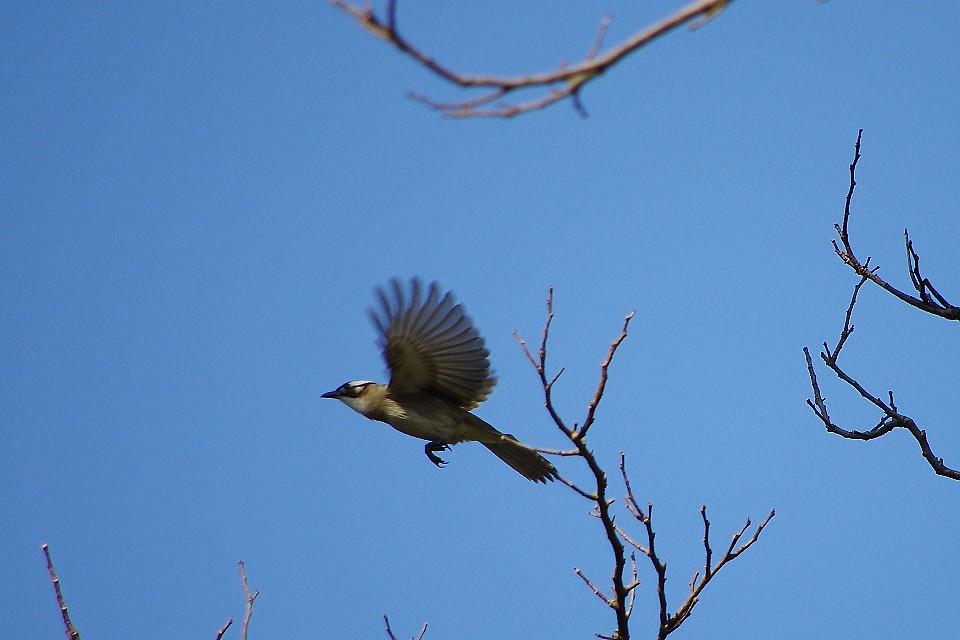k5鳥日記(1)